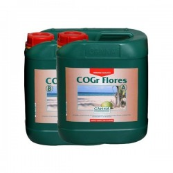 Canna Cogr Flores A&B