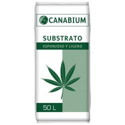 Canabium Sustrato