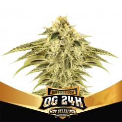 OG 24K BSF Seed