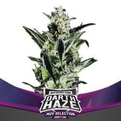 Darth Haze BSF Seeds