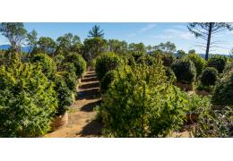 ¿Cuándo es mejor sembrar las semillas de marihuana en exterior?